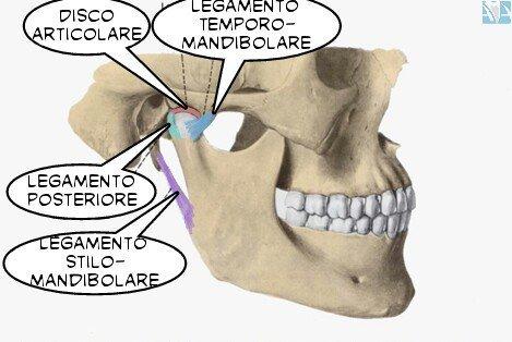 simonetta-alibrandi-osteopata-articolazione-temporo-mandibolare-difunzioni