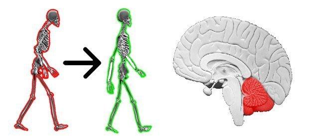 simonetta alibrandi osteopata posturologo postura corretta