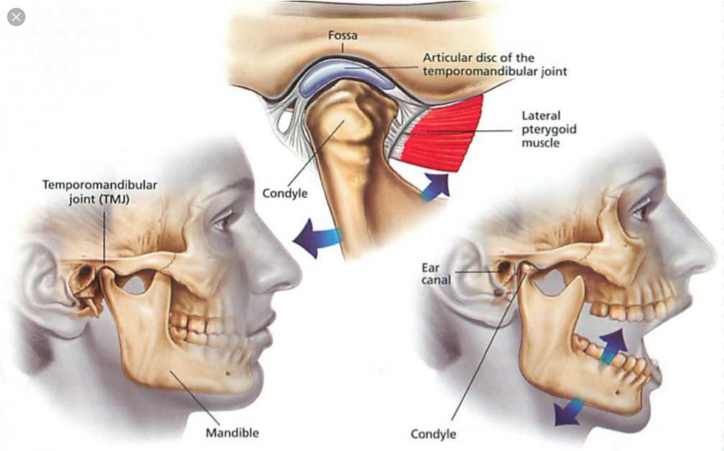 Correlazione embriologica, anatomica e scheletrica tra le disfunzioni temporo mandibolari e i disturbi all'orecchio (acufeni, ronzii)