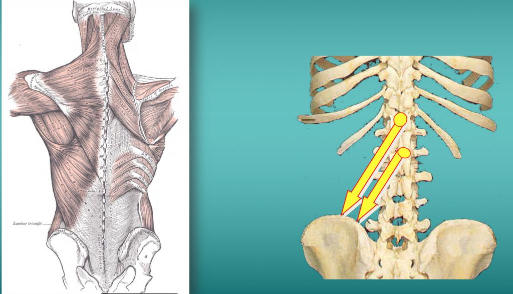 simonetta alibrandi osteopata posturologo fascia toraco lombare