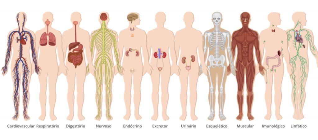 simonetta alibrandi osteopata posturologo apparati interni corpo umano