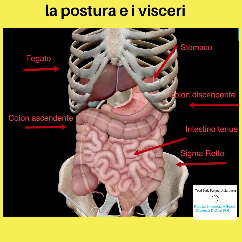 simonetta alibrandi osteopata posturologo roma postura e visceri relazioni contenitore contenuto