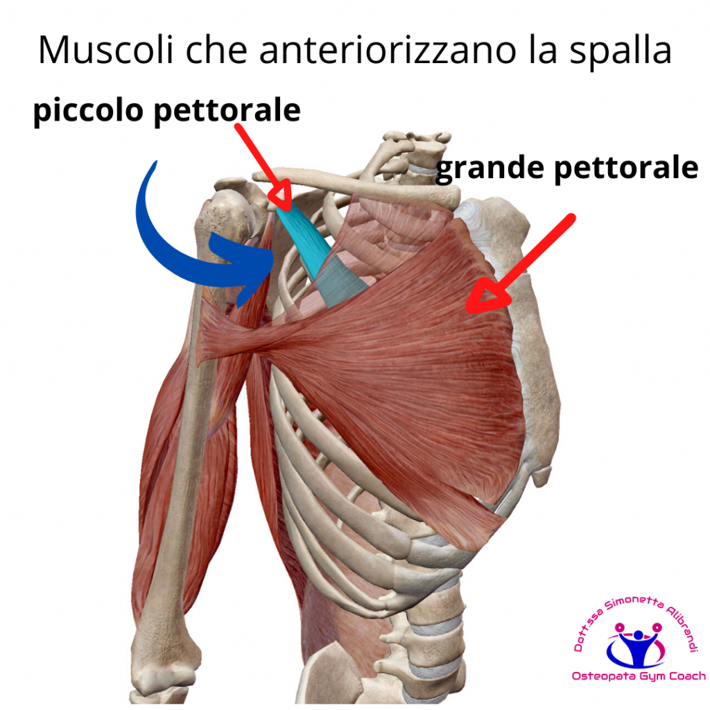 simonetta-alibrandi-osteopata-roma-posturologo-personal-trainer-dolore-alla-spalla-tendinite-lesione-al-sovraspinato-lesione-cuffia-dei-rotatori-impingment-subacromiale-piccolo-pettorale.