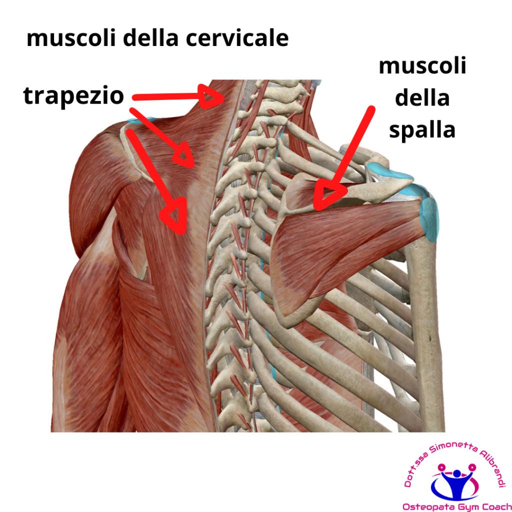 simonetta-alibrandi-osteopata-roma-posturologo-personal-trainer-dolore-alla-spalla-tendinite-lesione-al-sovraspinato-lesione-cuffia-dei-rotatori-tendinopatia-cervicalgia-trapezio