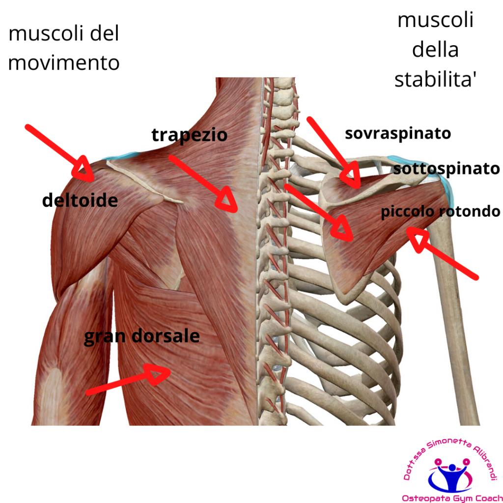 simonetta-alibrandi-osteopata-roma-posturologo-personal-trainer-dolore-alla-spalla-tendinite-lesione-al-sovraspinato-lesione-cuffia-dei-rotatori-tendinopatia-impingment-subacromiale