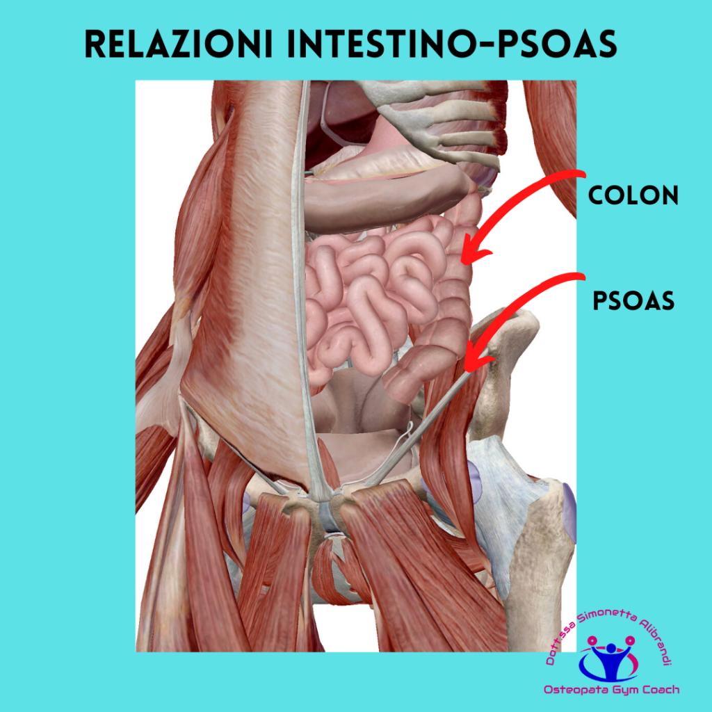 simonetta-alibrandi-osteopata-posturologo-personal-trainer-dolore-allinguine-mal-di-schiena-sintomi-rimedi-esercizi-Colon-irritabile-psoas