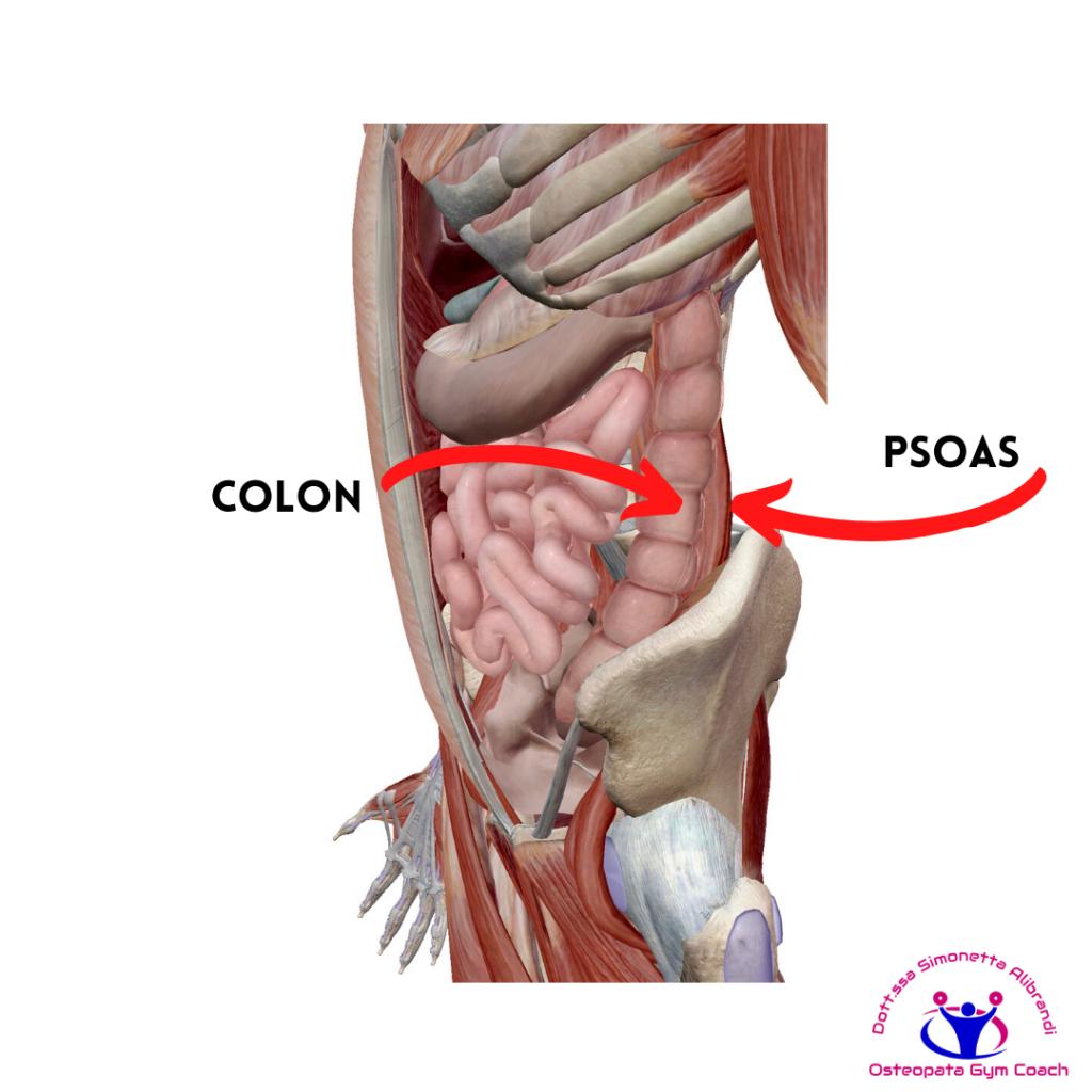 simonetta-alibrandi-osteopata-posturologo-personal-trainer-rimedi-esercizi-Colon-irritabile-ileopsoas